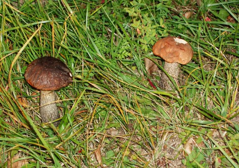 camping-vaclav-fauna-flora-3